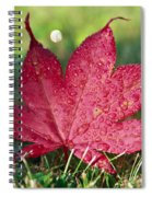 Red Maple Leaf And Dew Spiral Notebook