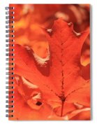 Peak Color Maple Leaves Spiral Notebook