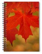 Red Maple Spiral Notebook