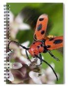 Red Milkweed Beetle Spiral Notebook