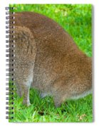 Red Necked Wallaby Spiral Notebook
