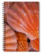 Red Orange Sea Shells Spiral Notebook