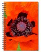 Red Oriental Poppy Spiral Notebook