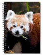 Red Panda  Ailurus Fulgens Eating Spiral Notebook