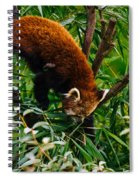Red Panda Tree Climb Spiral Notebook