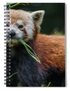 Red Panda With An Attitude Spiral Notebook
