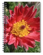 Red Pasque Flower Spiral Notebook