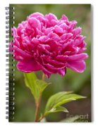 Red Peony Spiral Notebook