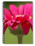 Red Pink Daisy Spiral Notebook
