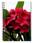 Red Plumeria Spiral Notebook