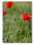 Red Poppies 2 Spiral Notebook