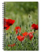 Red Poppies 3 Spiral Notebook