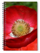Red Poppy 3 Spiral Notebook