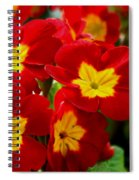 Red Primroses Spiral Notebook