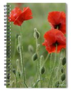 Red Red Poppies 1 Spiral Notebook