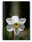 Red Rim Spiral Notebook