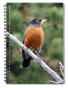 Red Robin II Spiral Notebook