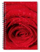 Red Rose And Water Drops Spiral Notebook