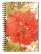 Red Rose At Noon Spiral Notebook