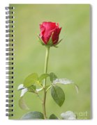 Red Rose Bud 1 Spiral Notebook