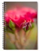 Red Rose Flourish Spiral Notebook