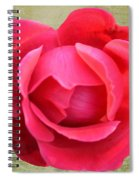 Red Rose Of Love Spiral Notebook