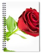 Red Rose On White Spiral Notebook