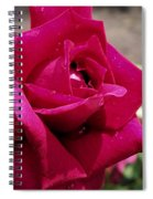 Red Rose Up Close Spiral Notebook
