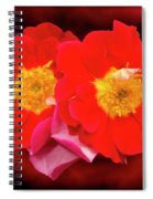 Red Roses Heart Spiral Notebook