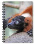 Red-ruffed Lemur Spiral Notebook