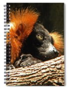 Red Ruffed Lemur Spiral Notebook