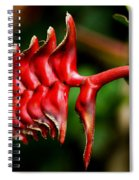 Red Scales Spiral Notebook
