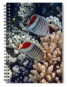 Red Sea Beauty 5 Spiral Notebook