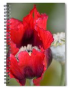 Red Sensation Spiral Notebook