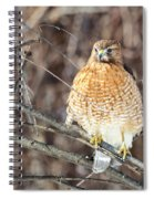 Red-shouldered Hawk Front View Square Spiral Notebook