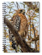Red-shouldered Hawk In A Willow Tree Spiral Notebook