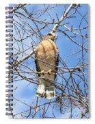 Red Shouldered Hawk In Tree Spiral Notebook