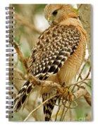 Red Shouldered Hawk Spiral Notebook