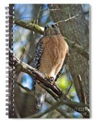 Red-shouldered Hawk On Branch Spiral Notebook