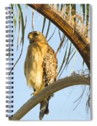 Red-shouldered Hawk On The Palm Tree Spiral Notebook