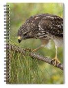 Red Shouldered Hawk Photo Spiral Notebook