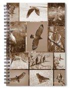 Red-shouldered Hawk Poster - Sepia Spiral Notebook