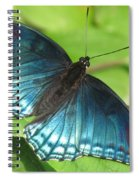 Red-spotted Purple Spiral Notebook