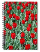 Red Spring Spiral Notebook