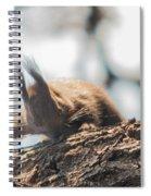 Red Sqirrel Spiral Notebook