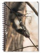 Red Squirrel - Balance Spiral Notebook