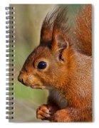 Red Squirrel 2 Spiral Notebook