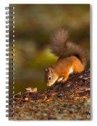 Red Squirrel In Autumn Spiral Notebook