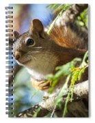 Red Squirrel In The Sun Spiral Notebook