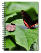 Red Stripe Spiral Notebook